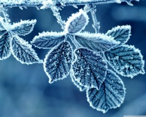 frozenleaves.jpg